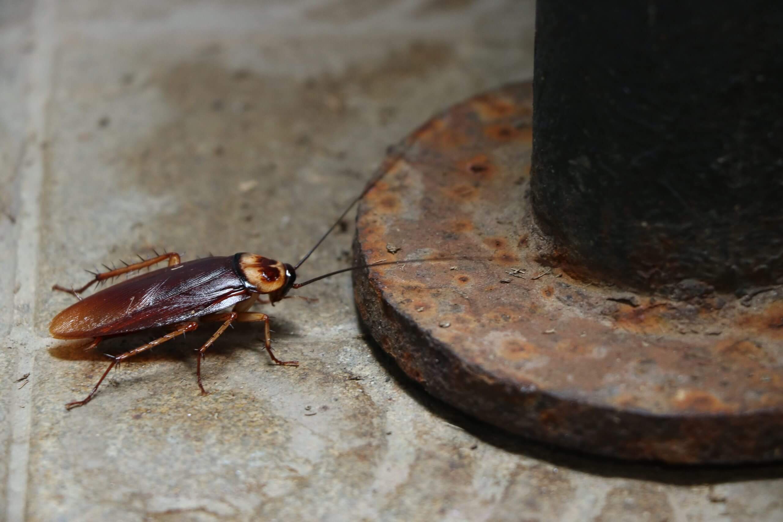 Food waste consumed by cockroaches