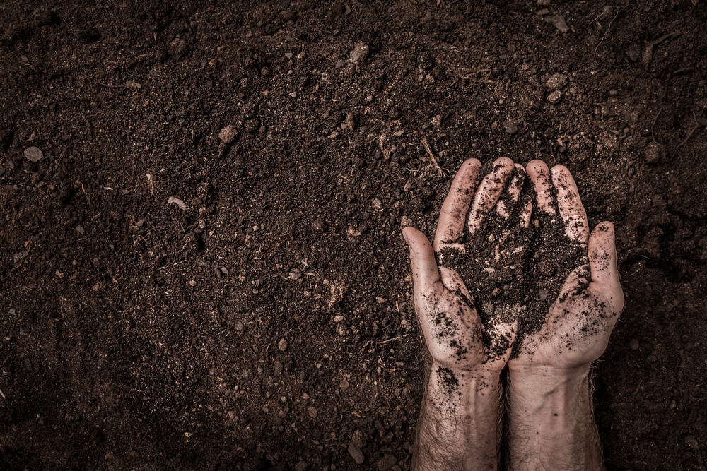 Contaminated Soil Pollution Remediation